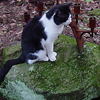 Лето-09. Моему пропавшему коту / Summer-09. To my lost cat