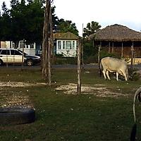 jamaica_24